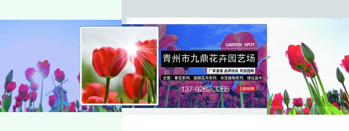 红花园地设计图片