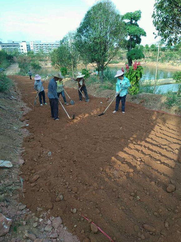 广东钻井废泥浆固化剂 黑河鱼池湖泊堆积固化土批发