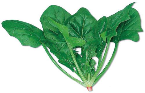 安康菠菜粉无添加剂