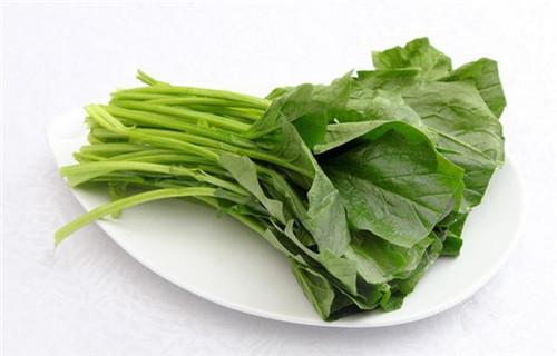 山东菠菜粉优质采购