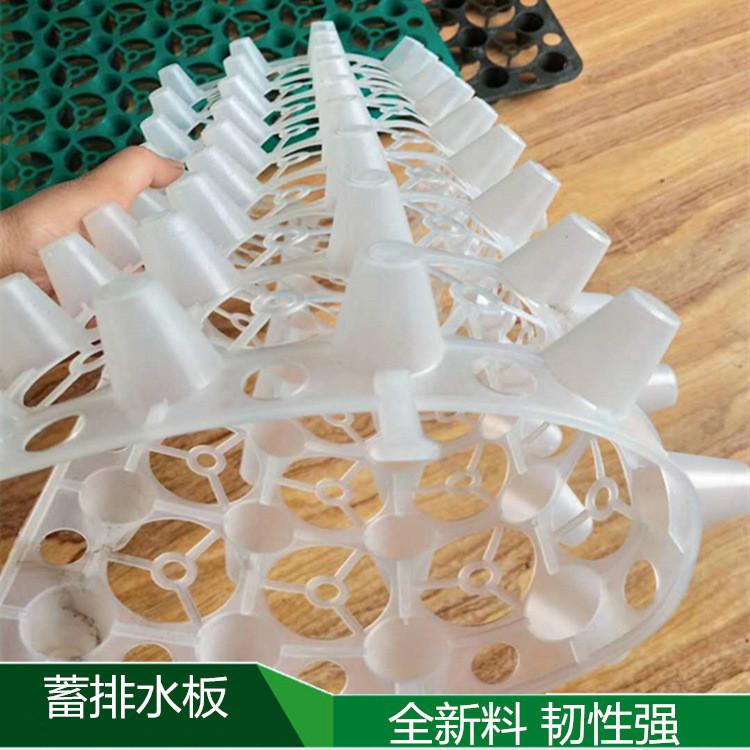 巢湖疏水板……屋顶绿化塑料蓄排水板厂家