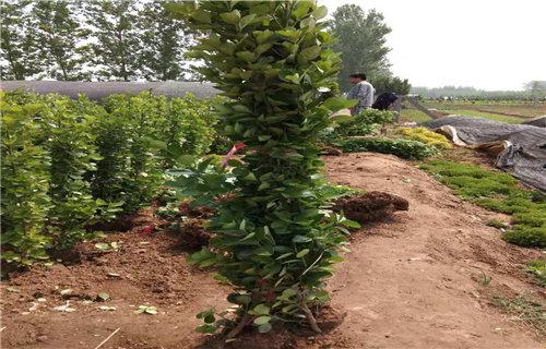 垂吊植物ps素材