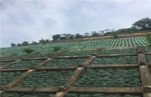 洛阳环保生态袋多少钱——现货供应