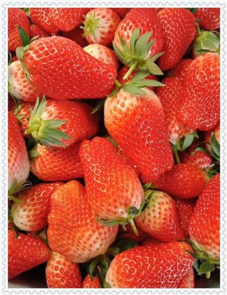 天水蓝金蓝莓树苗苗圃基地