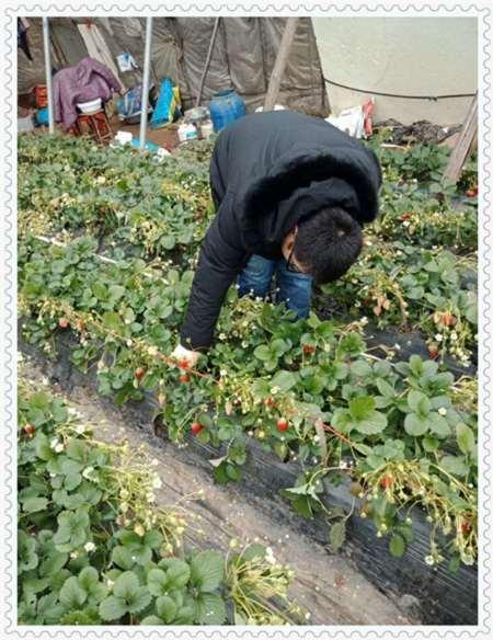 甘肃蓝金蓝莓树苗哪里的价格低
