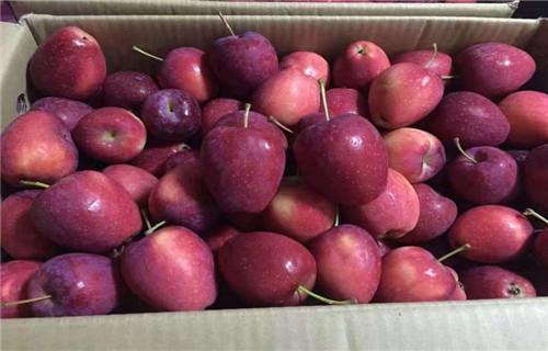 河源烟富3号苹果树苗一亩地种植利润