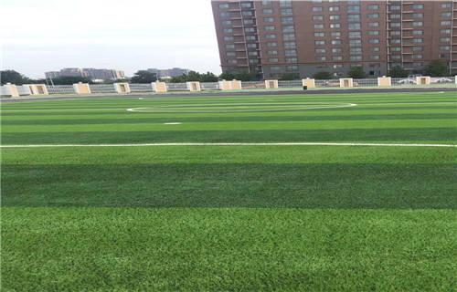 2020攀枝花足球场草坪