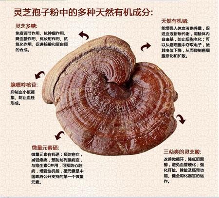 内江灵芝孢子营养质量有保证