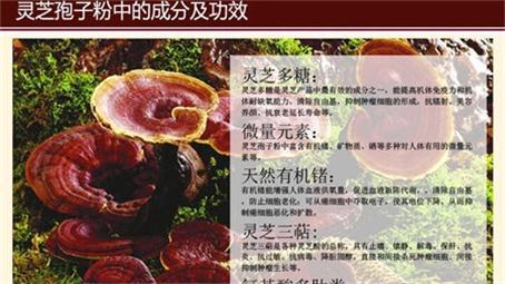 沧州免费灵芝技术培训成本低种类全