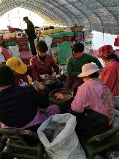 沧州灵芝技术培训班技术服务