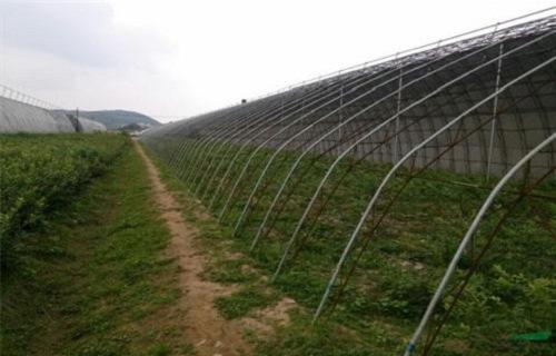 黄山北陆蓝莓苗园艺场