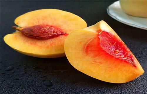惠州夏甜桃树苗多少钱