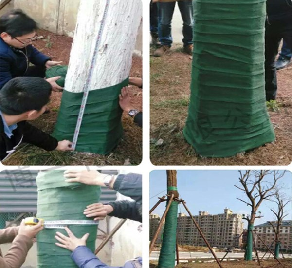 漳州缠树布的使用方法 树上缠的绿色布叫啥名字厂家
