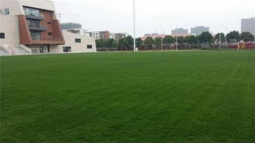 平顶山门球场草坪