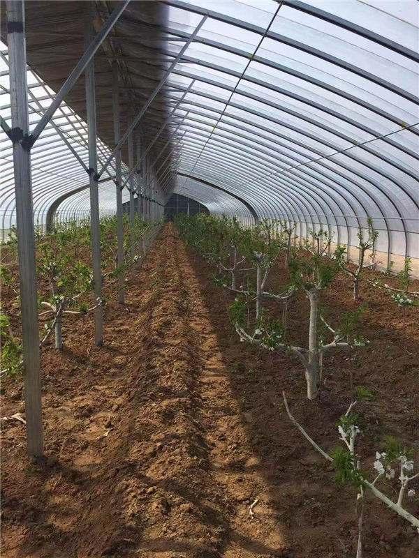 常州市蔬菜连栋大棚温室大棚公司