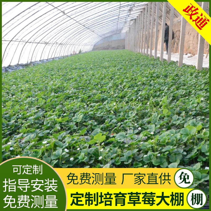 济南市平阴县新型蔬菜大棚花卉温室大棚
