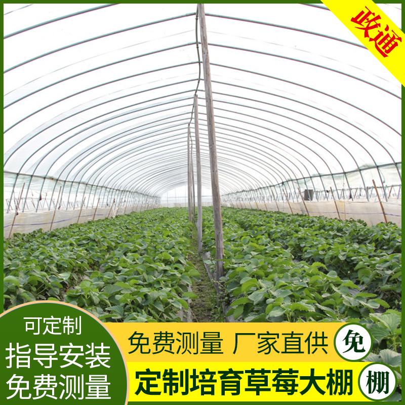 武山草莓大棚管品种多样