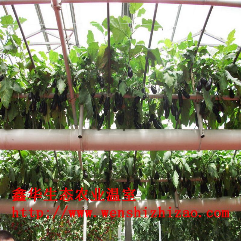 家庭无土栽培水培建设 管道式无土栽培设备 水耕种菜机批发