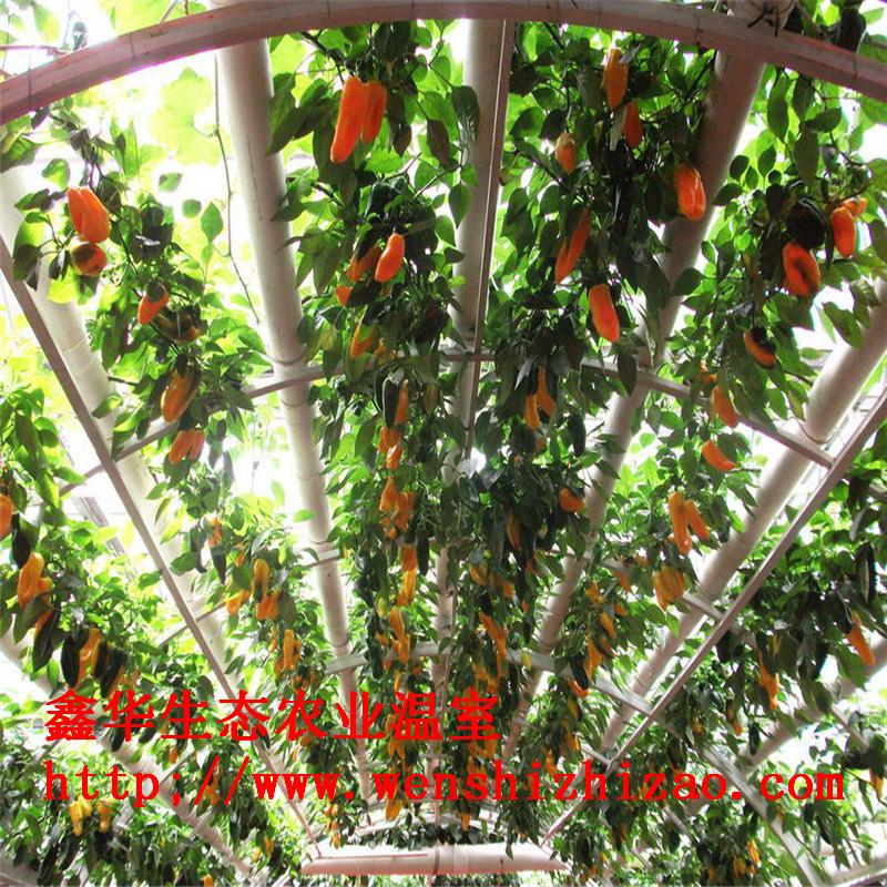 厂家定制 草莓梯形种植架 荷兰模式椰糠无土蔬菜栽培设备